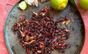 Chapulines insectos comestibles